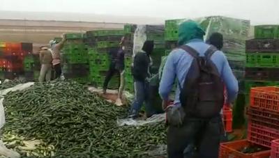 השמדת ירקות