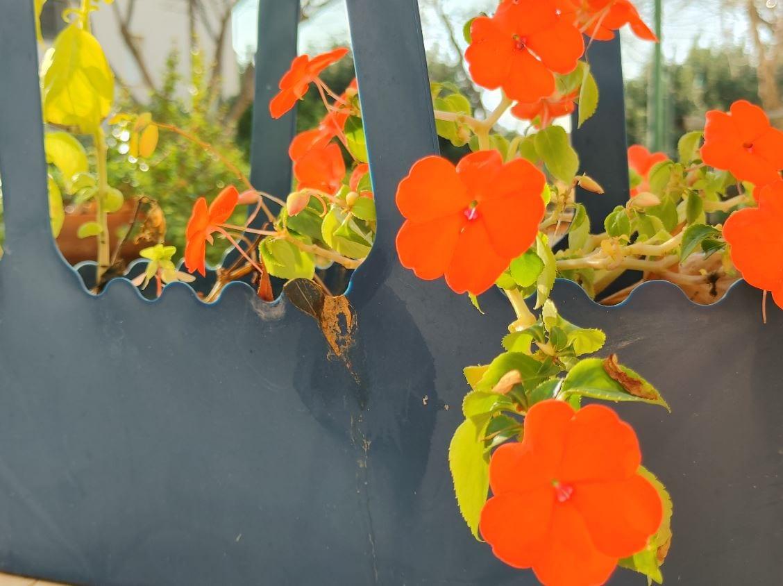 צילום פרחים מקרוב מאותה נקודה