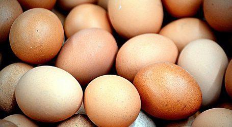 שפעת העופות: האם מסוכן לאכול ביצים ועוף?