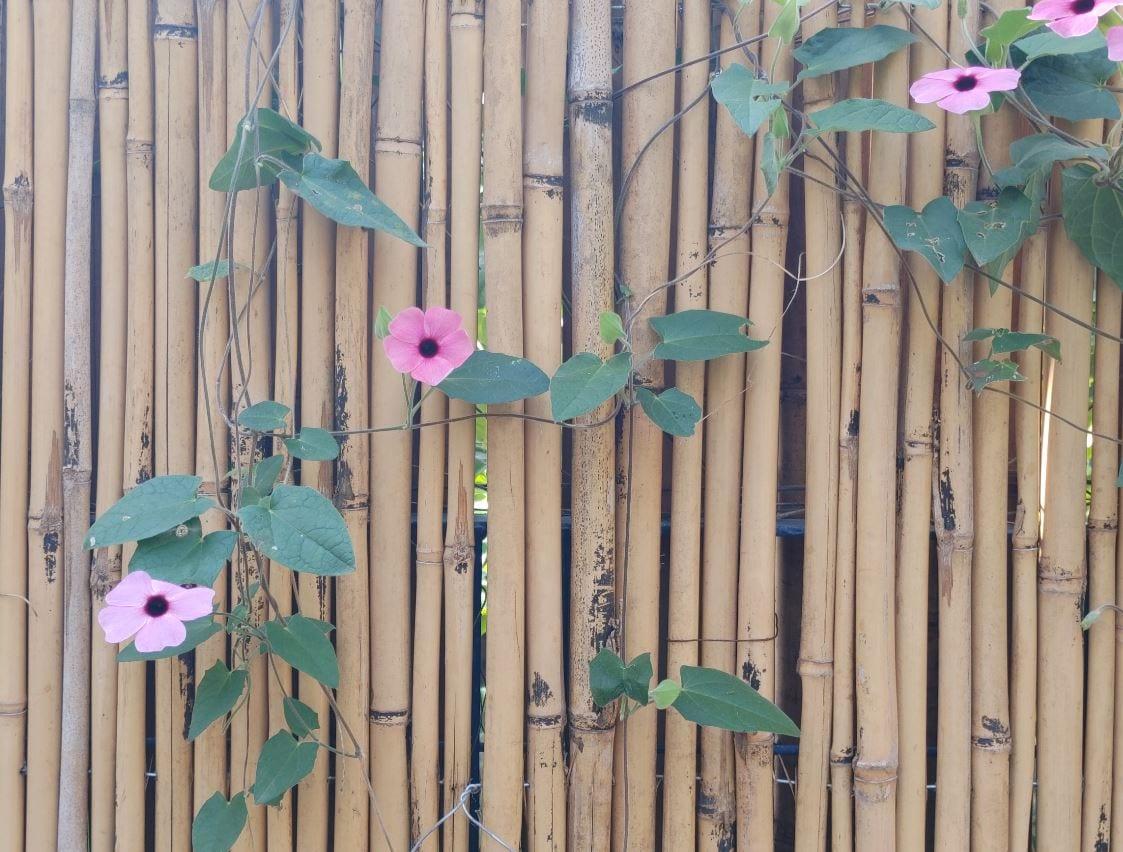 צילום בווינג של פרחים