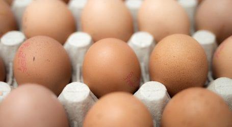 התגלה עוד מקרה של שפעת העופות. מה זה אומר על צריכת ביצים ועוף?