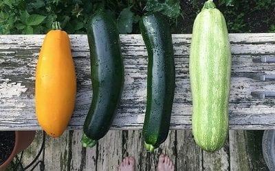 משרד החקלאות מציג: כך נשלם פחות על סל בסיסי של 16 ירקות ופירות