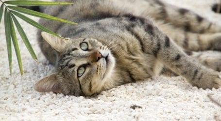 איך לרסס דירה עם חתול בבית