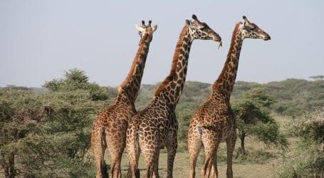 איך מתארגנים לקראת טיולים לטנזניה? טיפים להרפתקן המתחיל