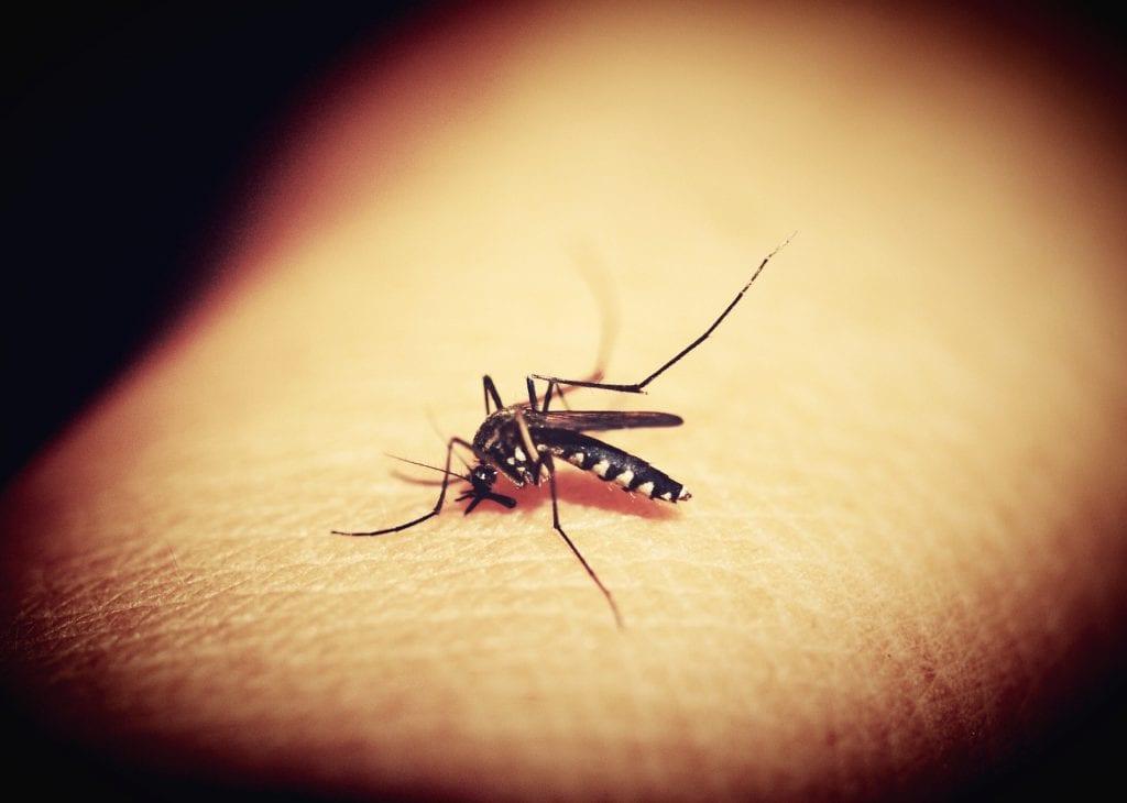 קדחת מערב הנילוס מתפשטת באמצעות יתושים