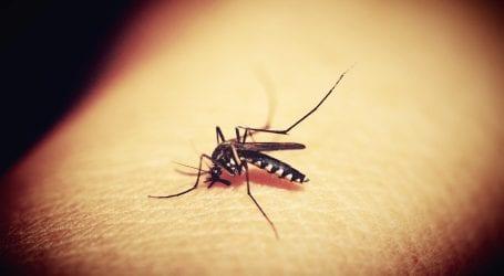 קדחת מערב הנילוס מתפשטת: יתושים נגועים התגלו באזורים נוספים בארץ