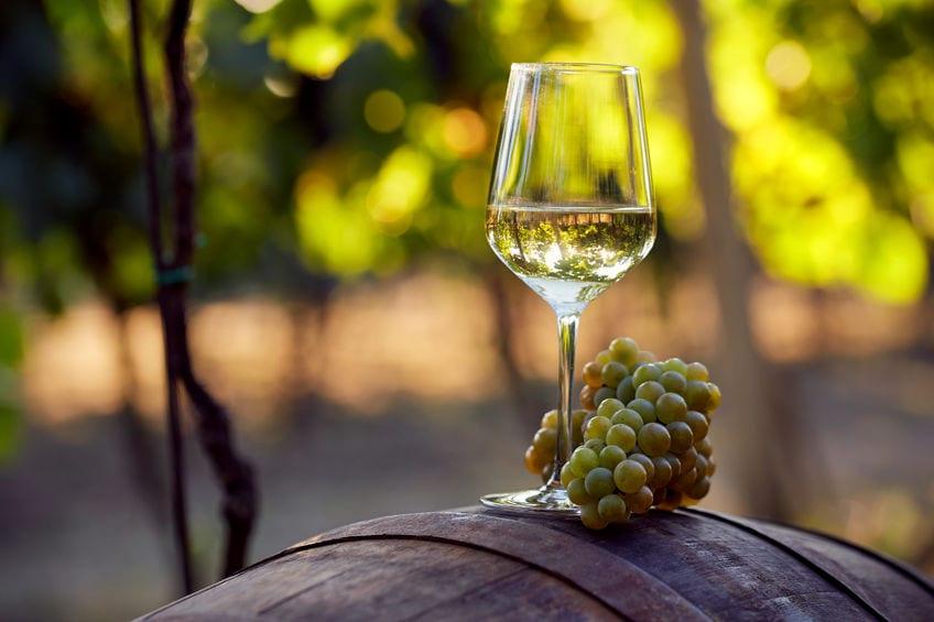 יינות לבנים מומלצים