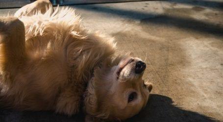 איך לאמץ כלב ולשמור על הבית נקי
