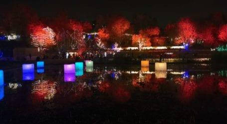 Winter Lights בגן הבוטני בירושלים: בילוי מושלם בחנוכה 2020