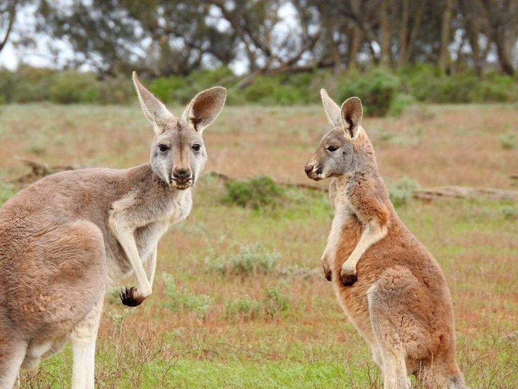טיסות ישירות לאוסטרליה