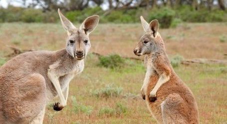 טיסות ישירות לאוסטרליה: אל על תוציא 3 טיסות. המכירה החלה