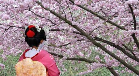 טיולים מאורגנים ליפן: טיול בתקופת פריחת הדובדבן