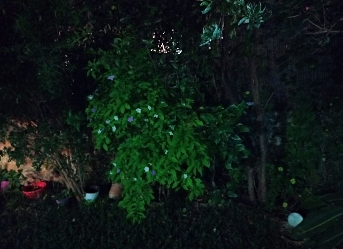 צילום לילה במצלמת LG K61
