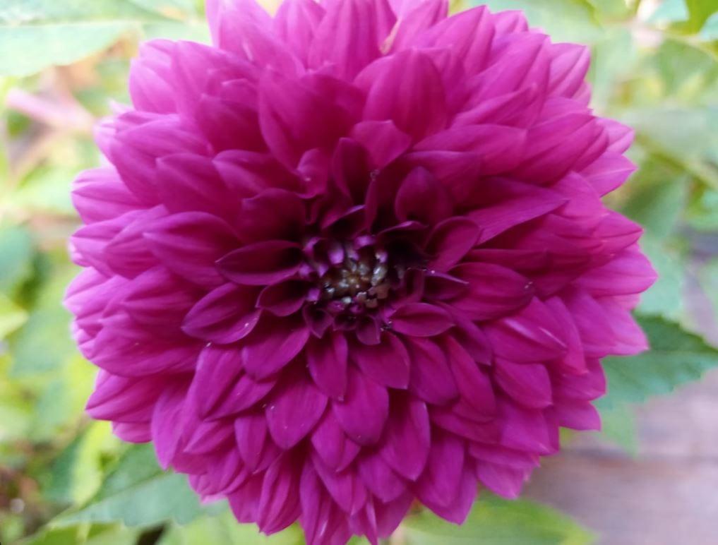 צילום פרח במצלמת מאקרו של LG K61