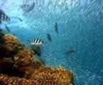 קורס צלילה באילת – קופון הנחה
