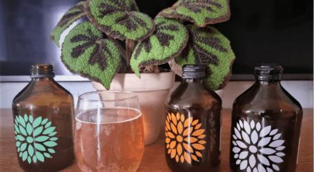טעמנו את משקה הקמבוצ'ה שהפך ללהיט: VIGO קומבוצ'ה עם מי ורדים, כוסברה ועוד