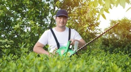 כיצד לבחור חברת גיזום עצים?