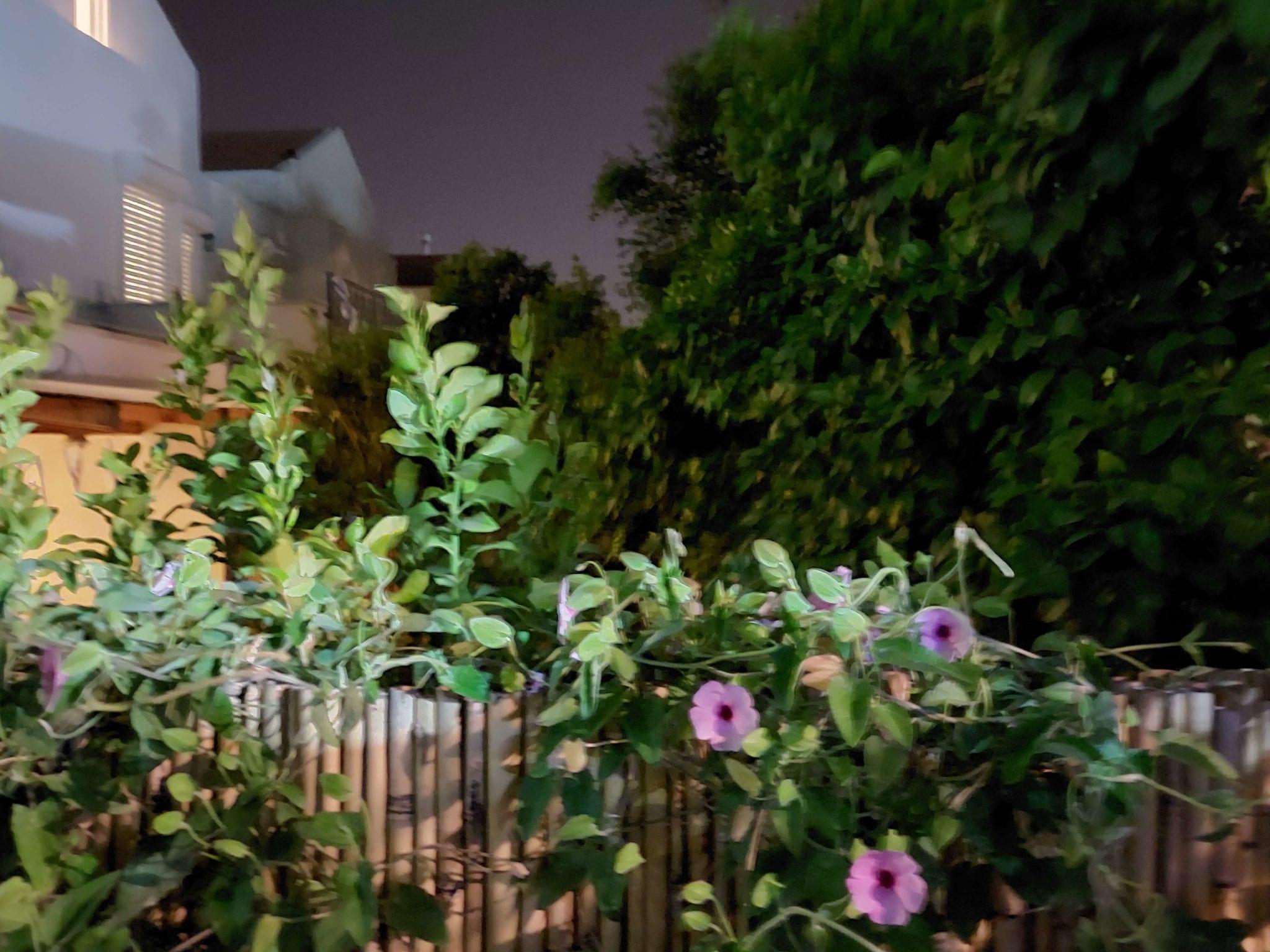 צילום לילה בגלקסי A52. צילום: דפנה הראל כפיר