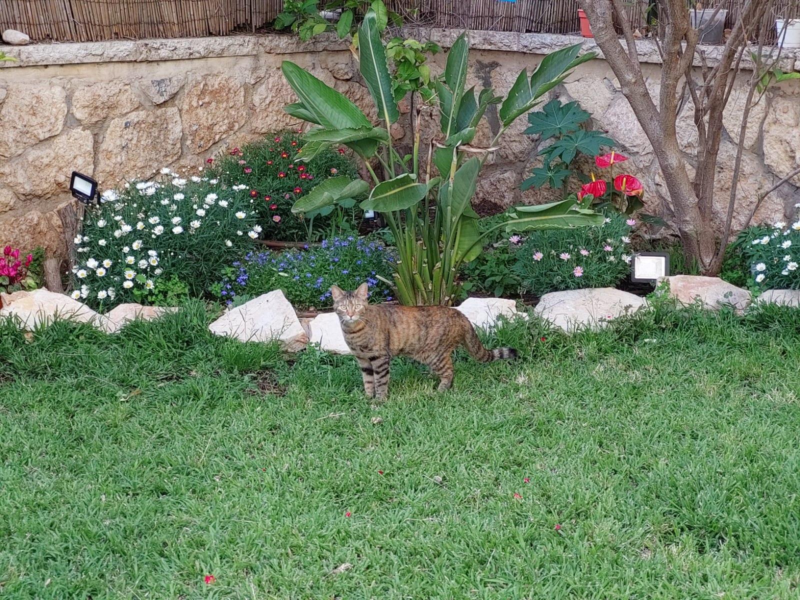 צילום חתול במצלמת סמסונג גלקסי A72