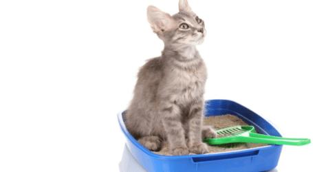 חול לחתולים – סוגים שונים של חול